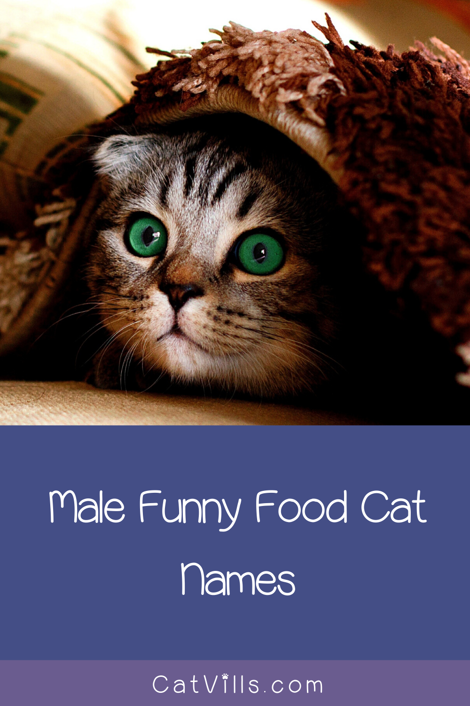 156 Funny Food Cat Names Cat Names Cats Funny