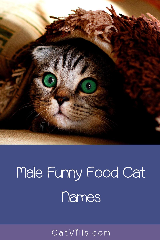 156 Funny Food Cat Names CatVills in 2020 Cat names