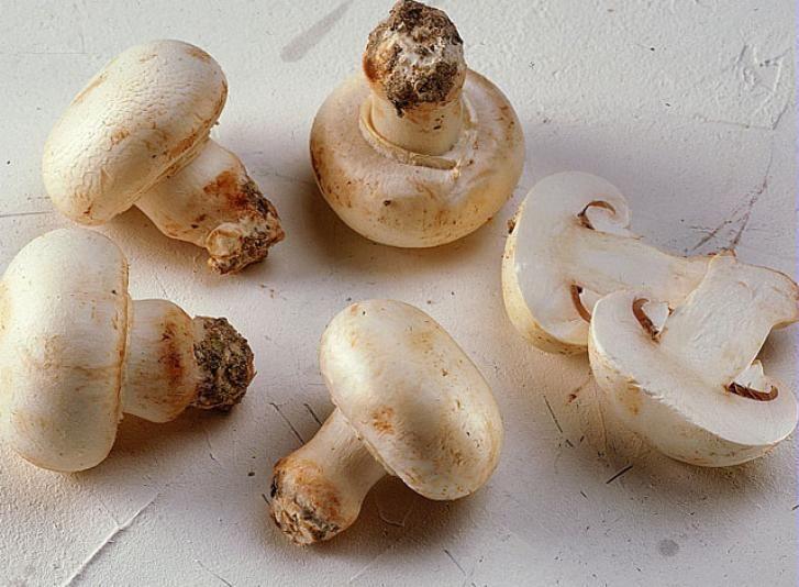 la culture du champignon de paris sur compost champignons pinterest compost permaculture. Black Bedroom Furniture Sets. Home Design Ideas