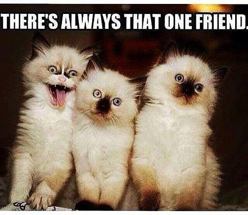 Crazy Friend Quotes Google Search Funny Friend Memes Friendship Humor Friendship Memes