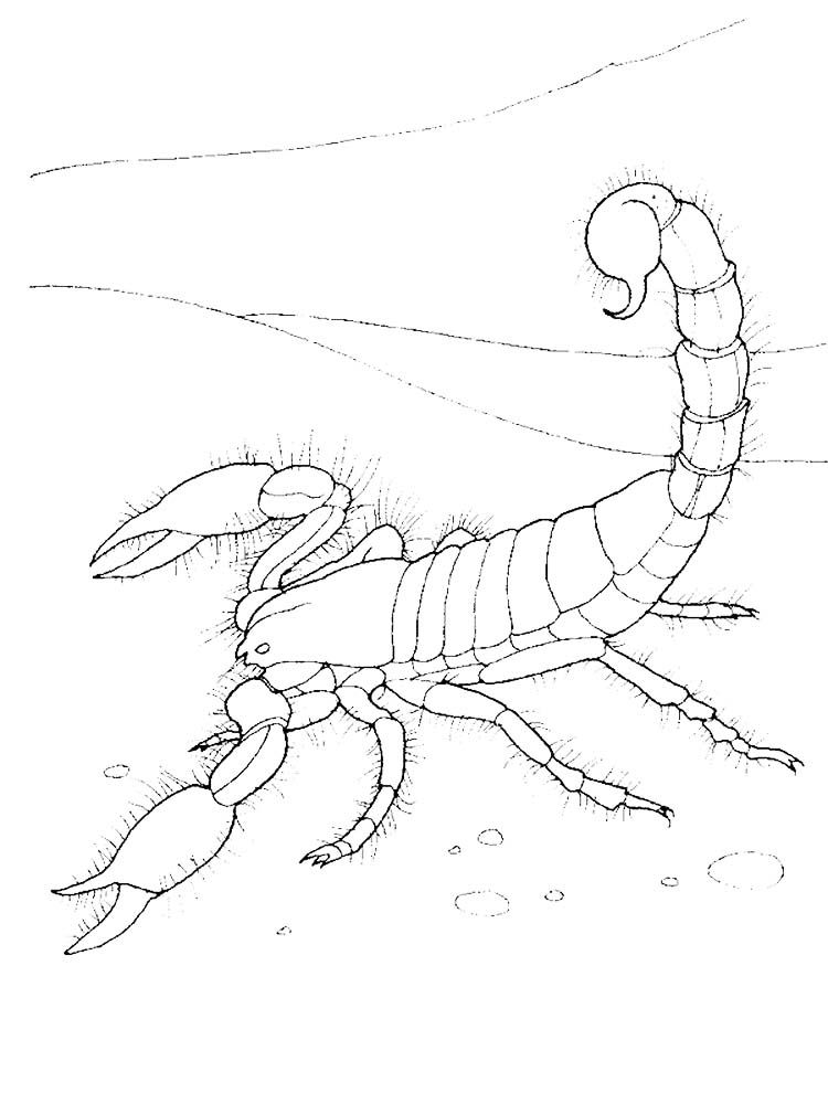 Scorpion Coloring Pages Image Scorpions Are Poisonous Insects From The Arachnida Class Which Are Often Seen As Creepy Animals Scorpions Are Poisonous Arthropo