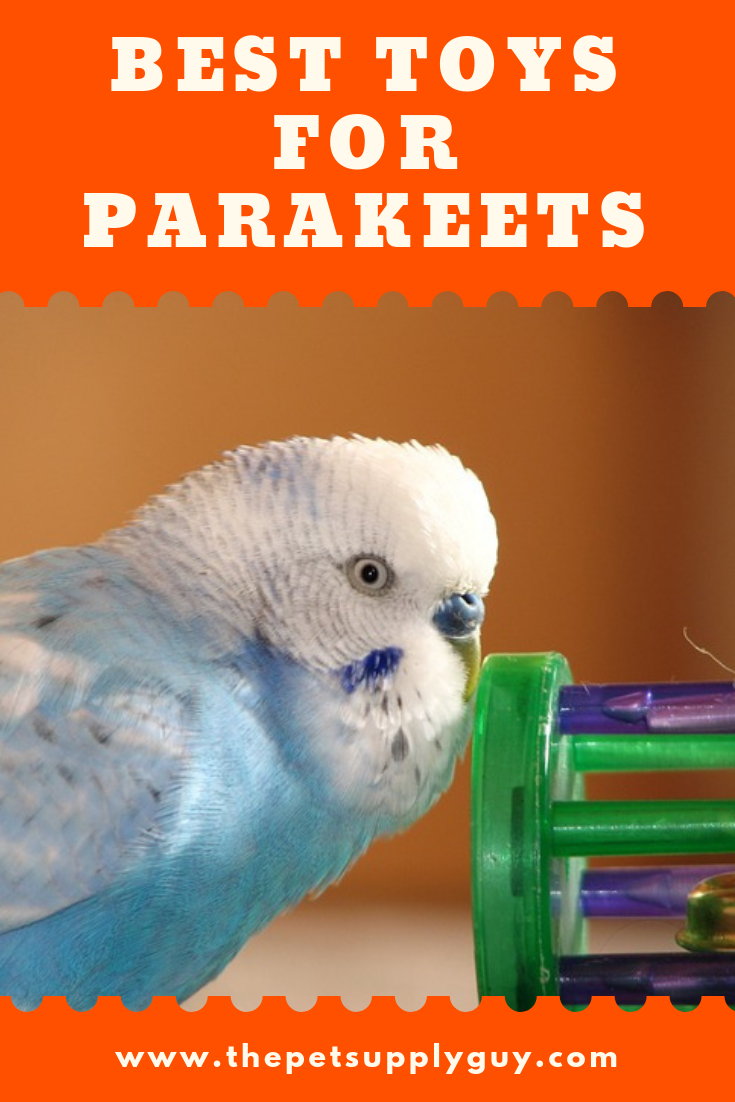 What Do Parakeets Like To Play With Parakeet Toys Parakeet