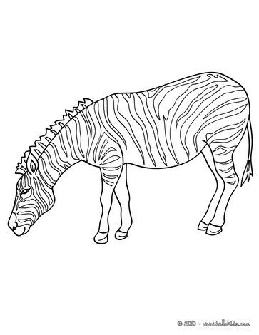 If You Are Crazy About Coloring Sheets Will Love This Zebra Picture Page Get Them For Free In AFRICAN ANIMALS Pages Find Out Your