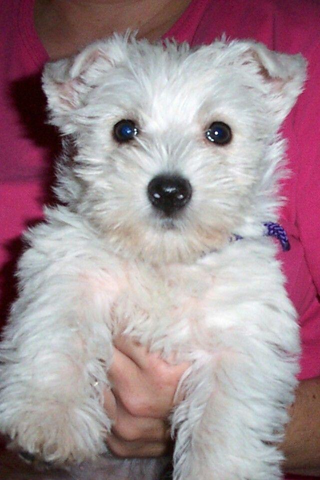 Pet Portrait Custom Dog Pop Art Custom Pet Portrait From Etsy Dog Pop Art Dog Pop Pop Art Animals