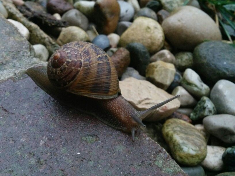 #snail coming out after summer rain