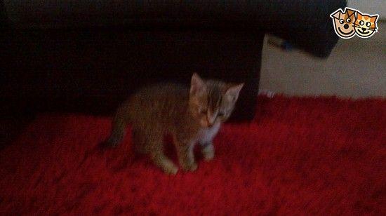2 Kittens For Sale Accrington Lancashire Pets4homes Kitten For Sale Kittens Litter Training