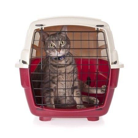 Katzenboxen