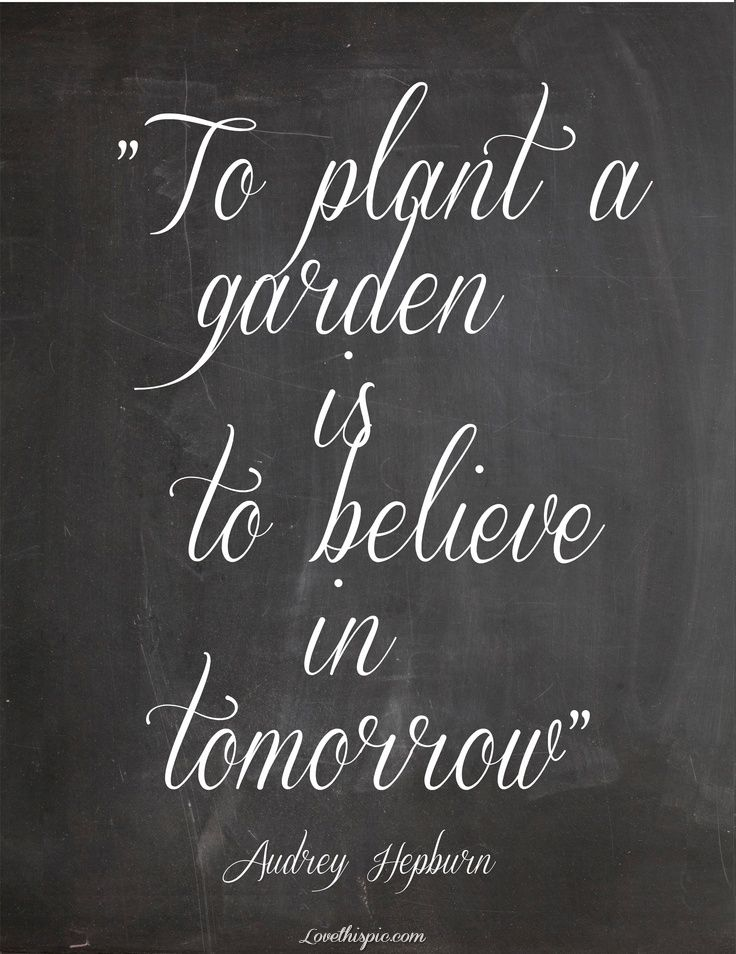 Garden Quotes Enchanting To Plant A Gardenquote Quotes Future Audrey Hepburn Faith Garden