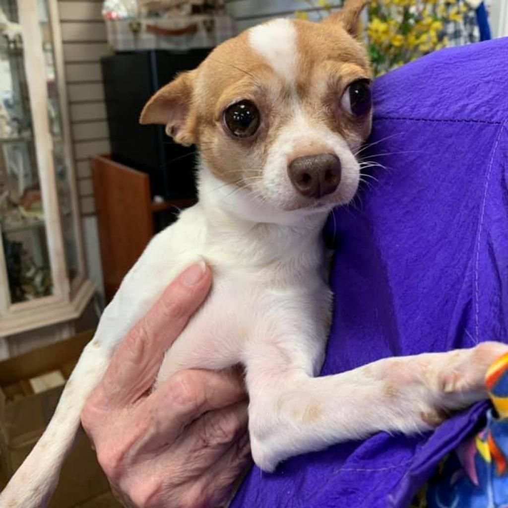 Adopt Mouse on Puppy adoption