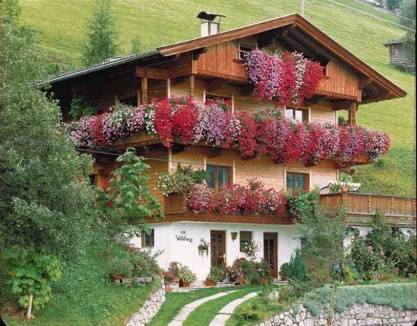 g ranium lierre 39 summer shower 39 f1 en m lange jardin pinterest lierre g raniums et melange. Black Bedroom Furniture Sets. Home Design Ideas