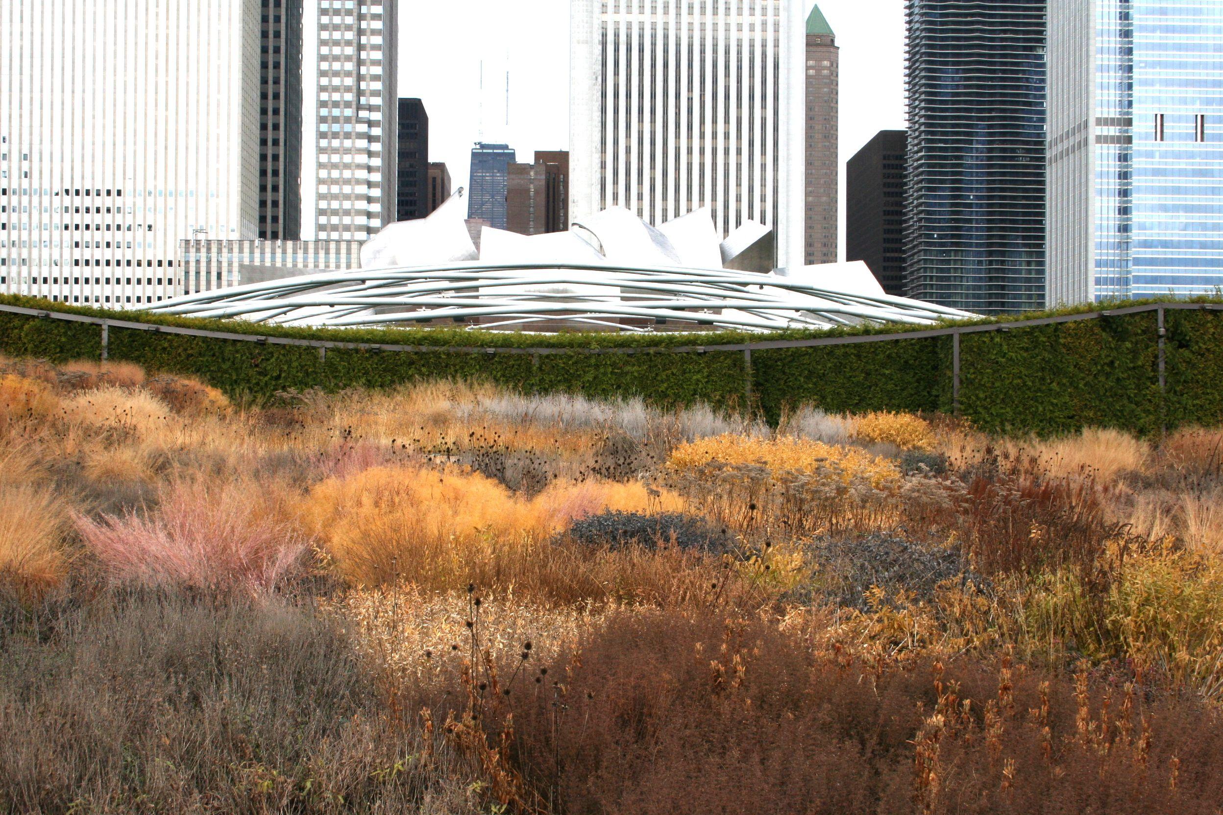 piet oudolf + ggn :: millennium park, chicago | Piet Oudolf is a ...