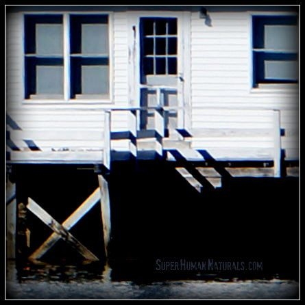 10-16-2014 Cottage Closeup ~ Happiness is a tiny cottage on the sea. *** POSTCARDS FROM FRIENDSHIP. A pic a day served fresh daily from Friendship Maine. SuperHumanNaturals.com *** #toothsoap #cure #cankersores