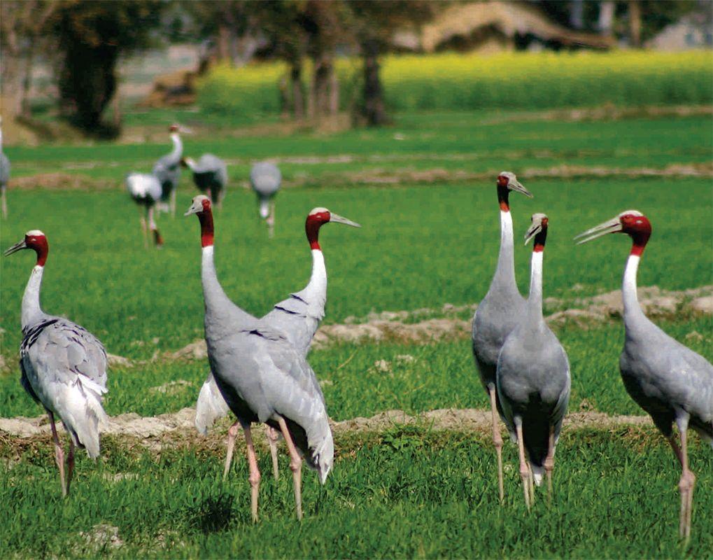 Manas Wildlife Sanctuary India in 2020 Wildlife