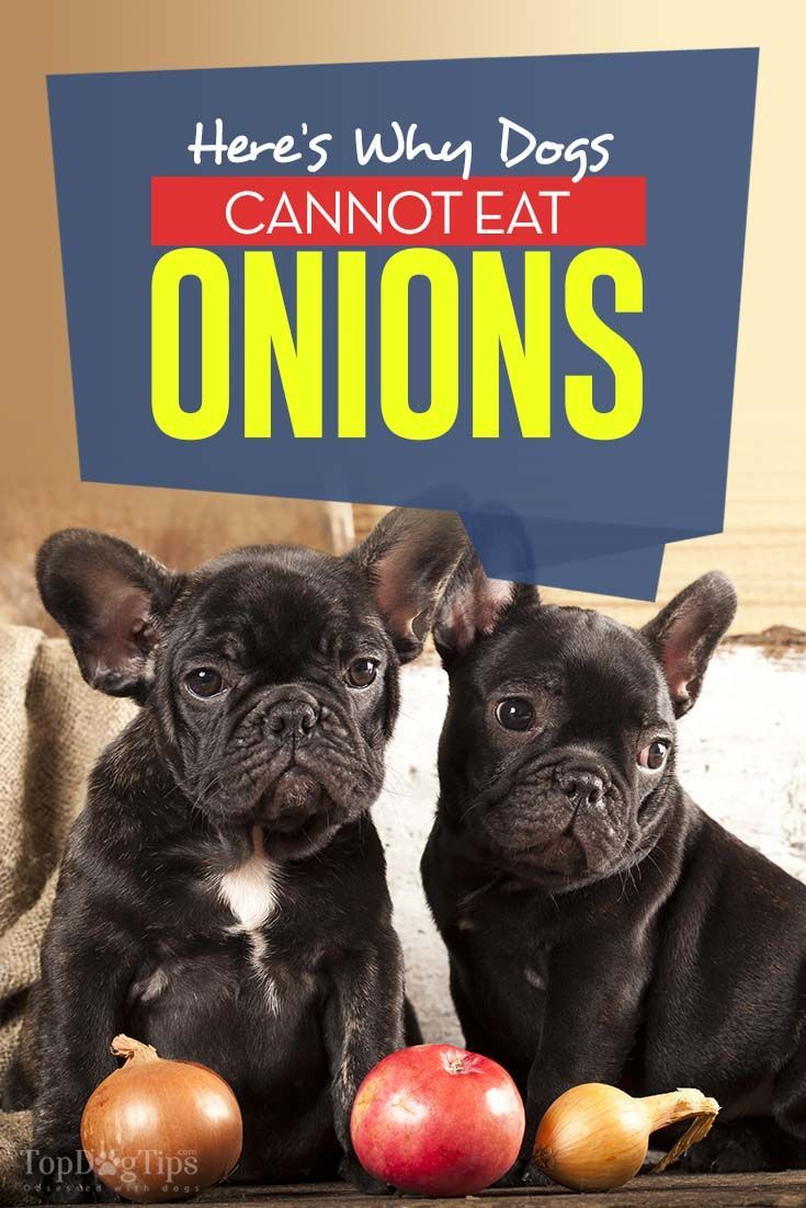 The Reason Dogs Can Never Eat Onios