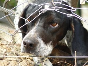 A rescued or rehomed dog can be an amazing addition to a home or family. As with any dog, it's important to find the right match for your lifestyle and it's important to know that there may be some issues to deal with if you are adopting an older dog.