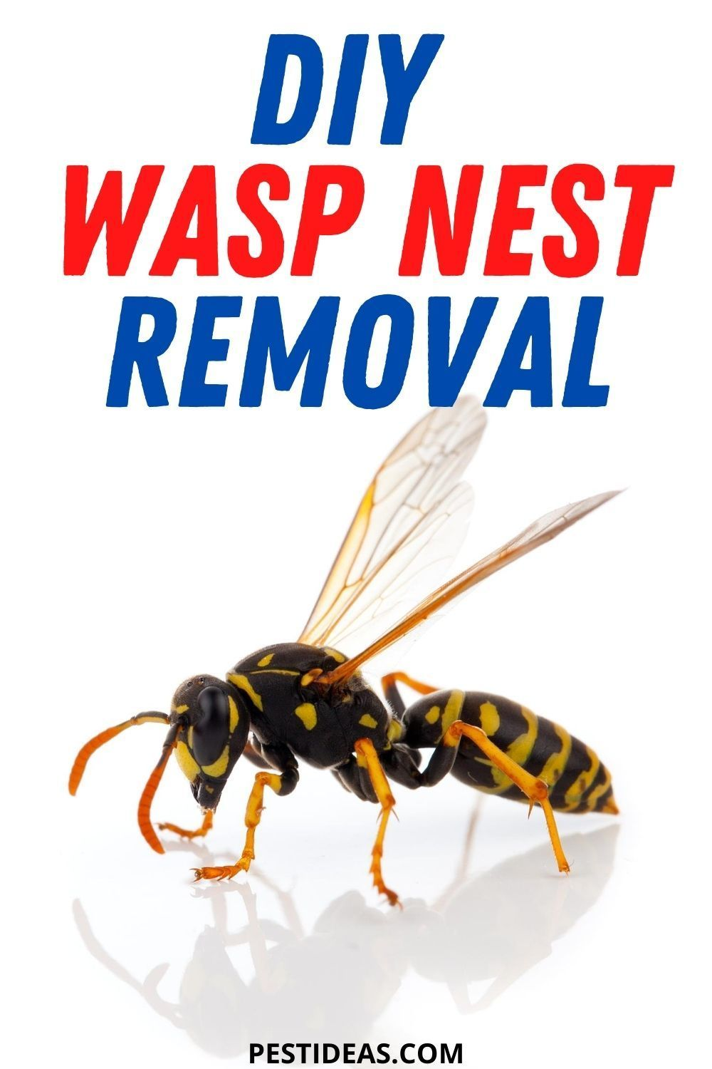 Diy wasp nest removal in 2020 wasp nest removal wasp