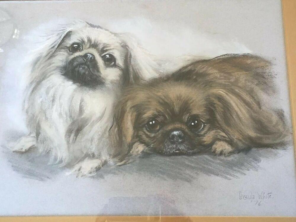 Original Ursula White Pet Dog Pekingese Pastel Portrait Painting