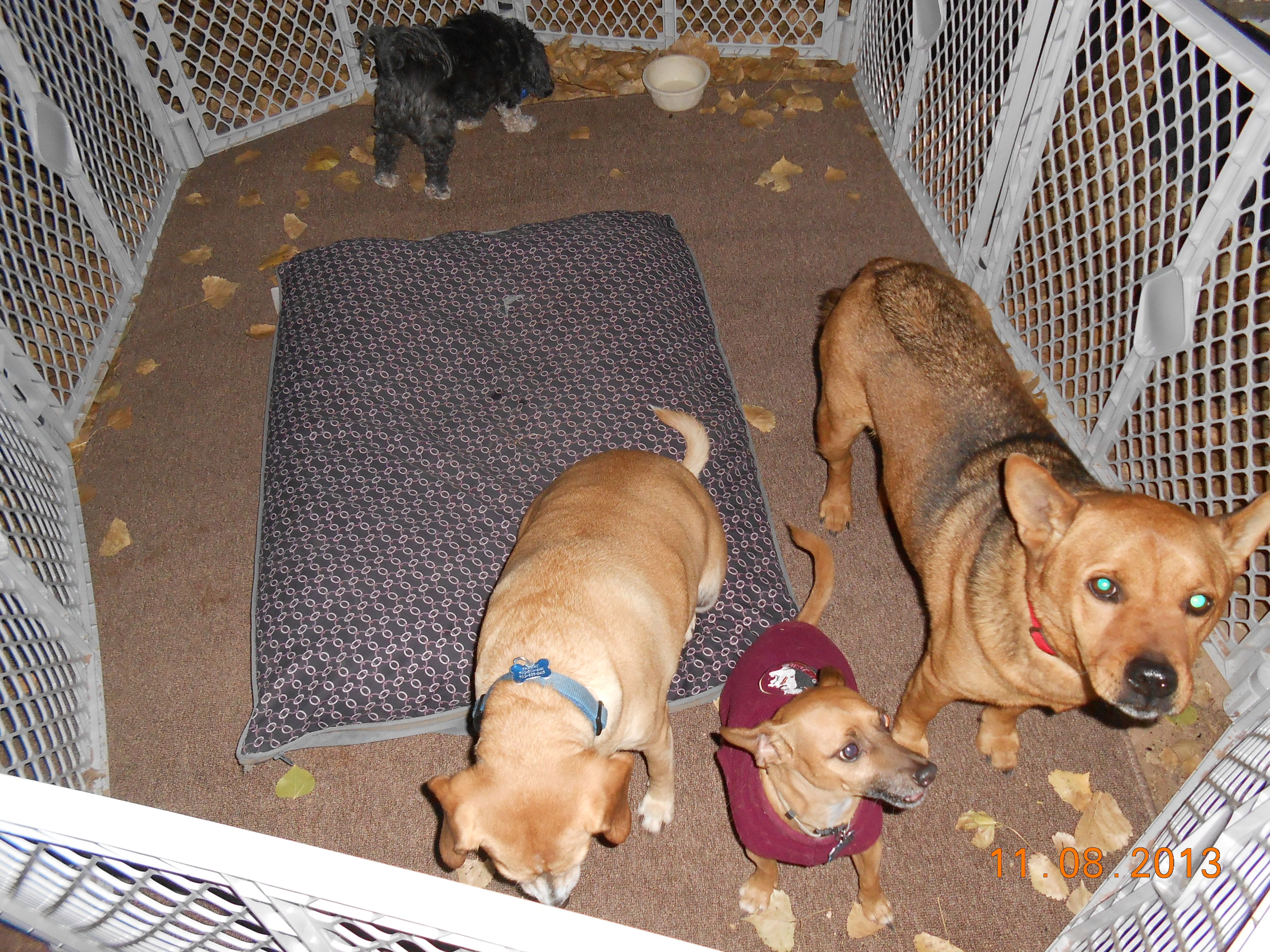 We have our own portable playpen so we never miss any of the action! - at Zion National Park, Watchman's Campground