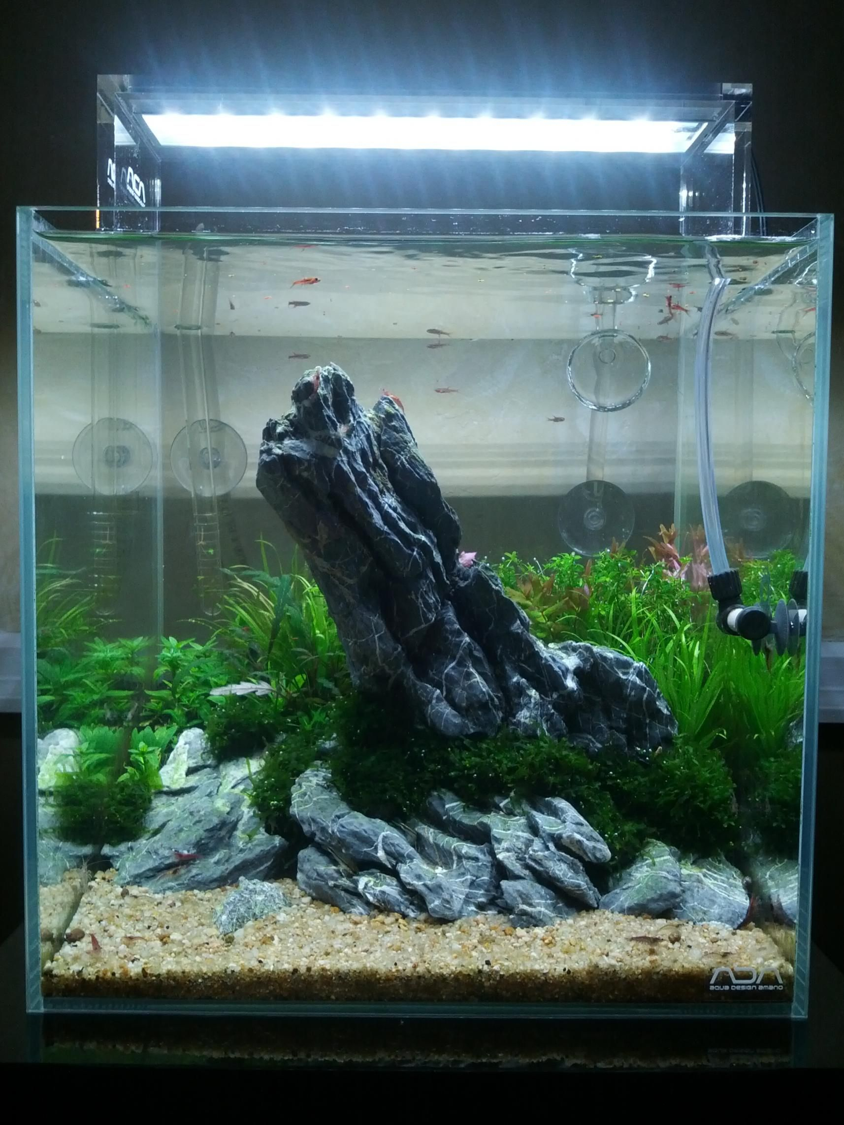 Create an Iwagumi Aquascape Do it yourself Pinterest