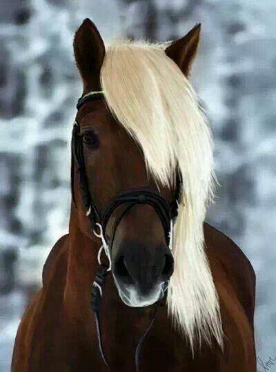 Pretty | Horses | Pinterest | Horses, Animals and Cute horses