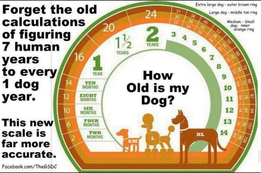 How old is my dog? Forget the old calculations of figuring 7 human years to every 1 dog year...