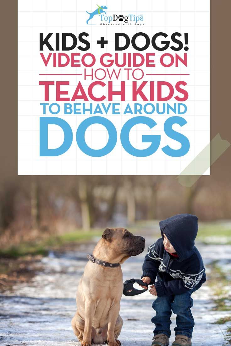 How To Teach Kids To Behave Around Dogs How To Videos For Dog