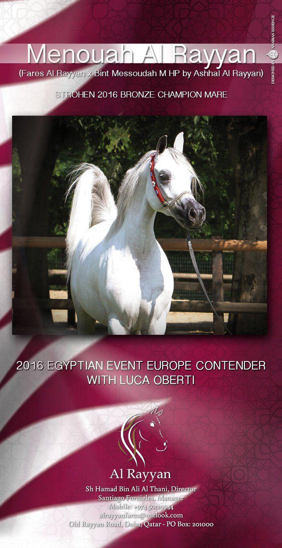منوة الريان منافسة البطولة الأوربية للسلالة المصرية Horses Mare Egyptian
