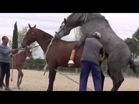 New Animal mating video compilation Horse mating,Horse ...