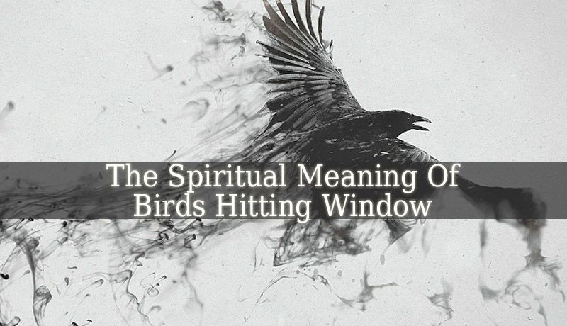 The Spiritual Meaning Of Birds Hitting Window is more