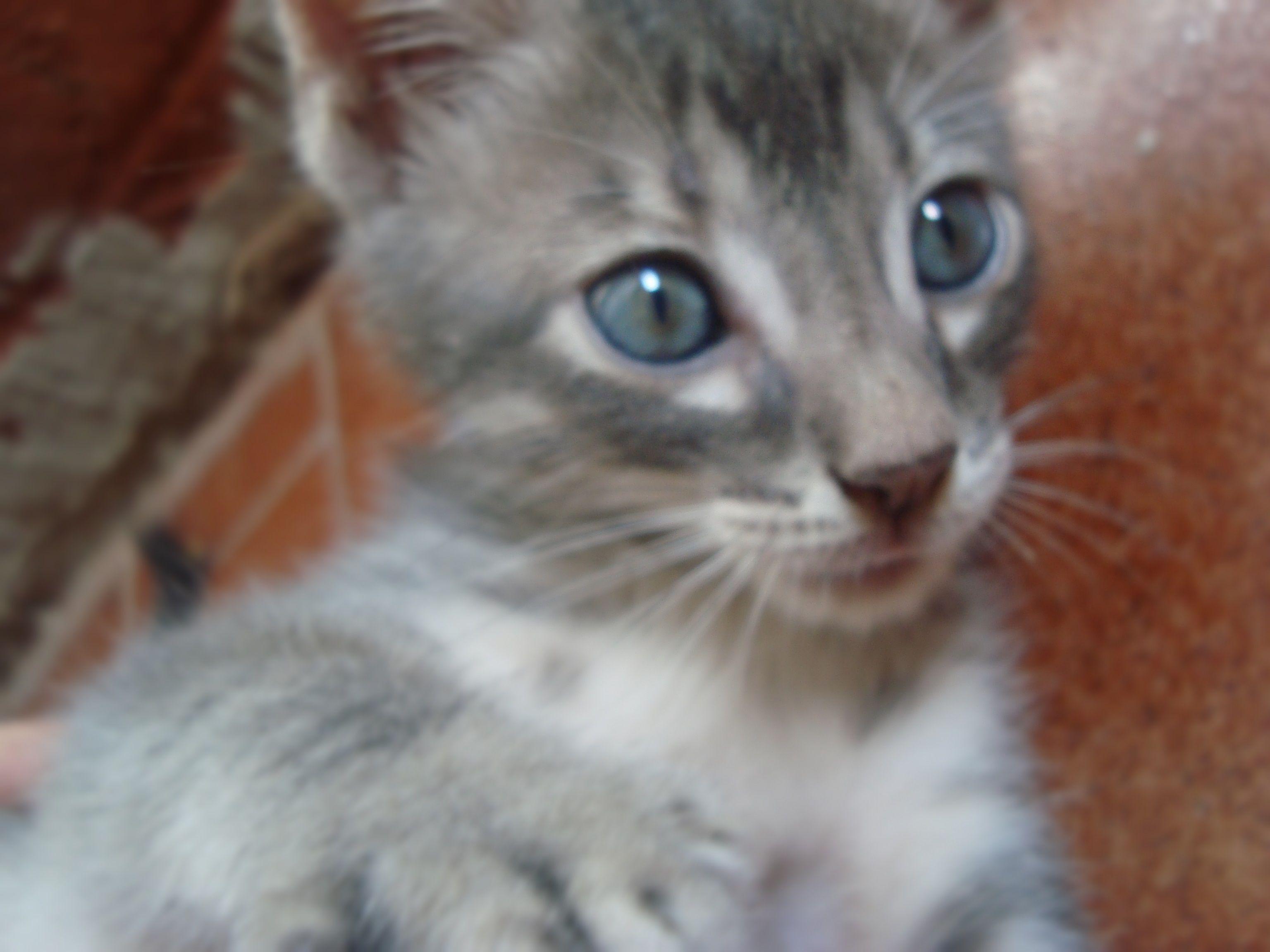 Griselda :3 #kittens #cats