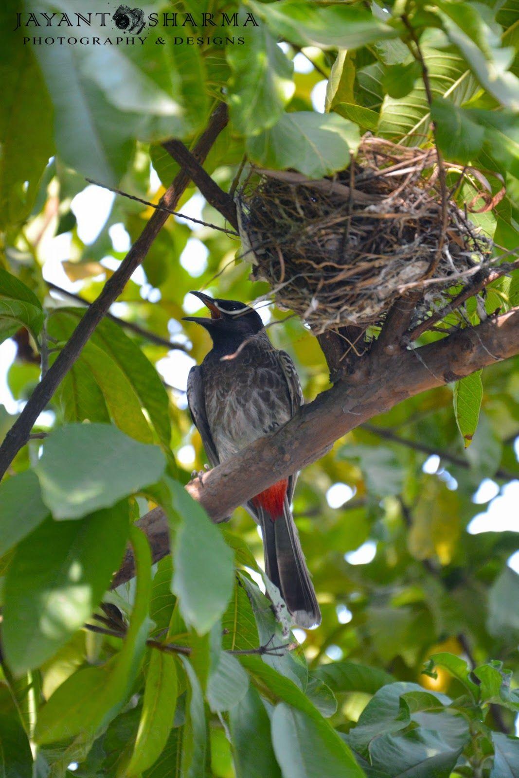 Mother Bird Near a Nest on Tree Bird photography, Mother