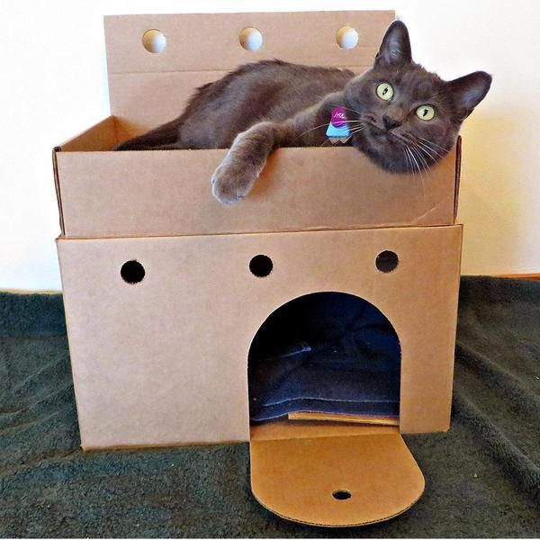 Castles for Shelter Cats #animalrescue