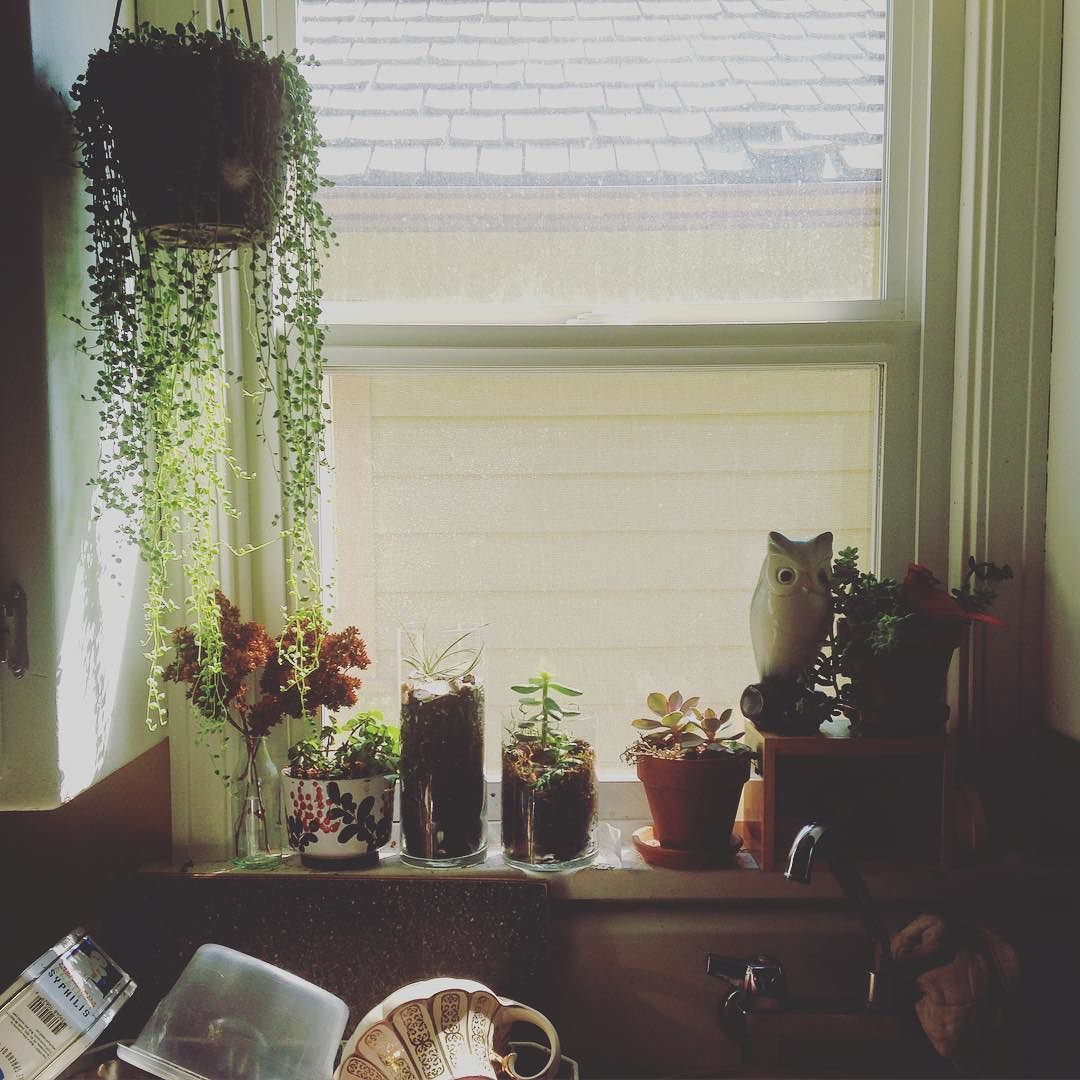 Kitchen window succulent garden that I love to fuss with ...