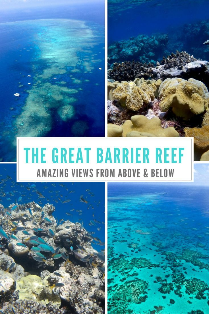 The Great Barrier Reef: The Best Views from Above and Below the Reef
