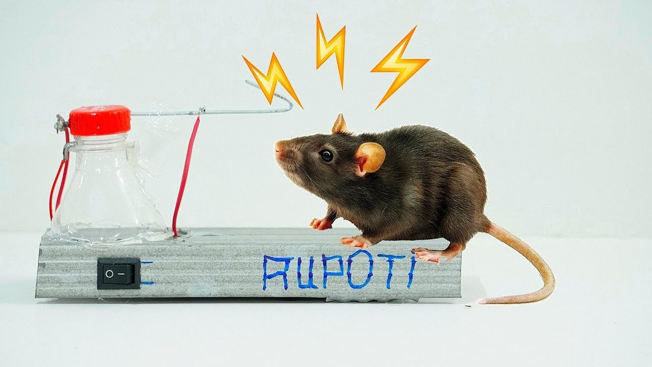 How To Make a High Voltage Mouse Trap | Homemade mouse traps, Mouse traps,  Rat trap diy