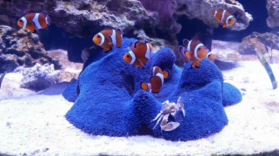 Pin By Carlos Luna On Fish Coral Fish Tank Marine Fish Tanks Aquarium Fish Tank