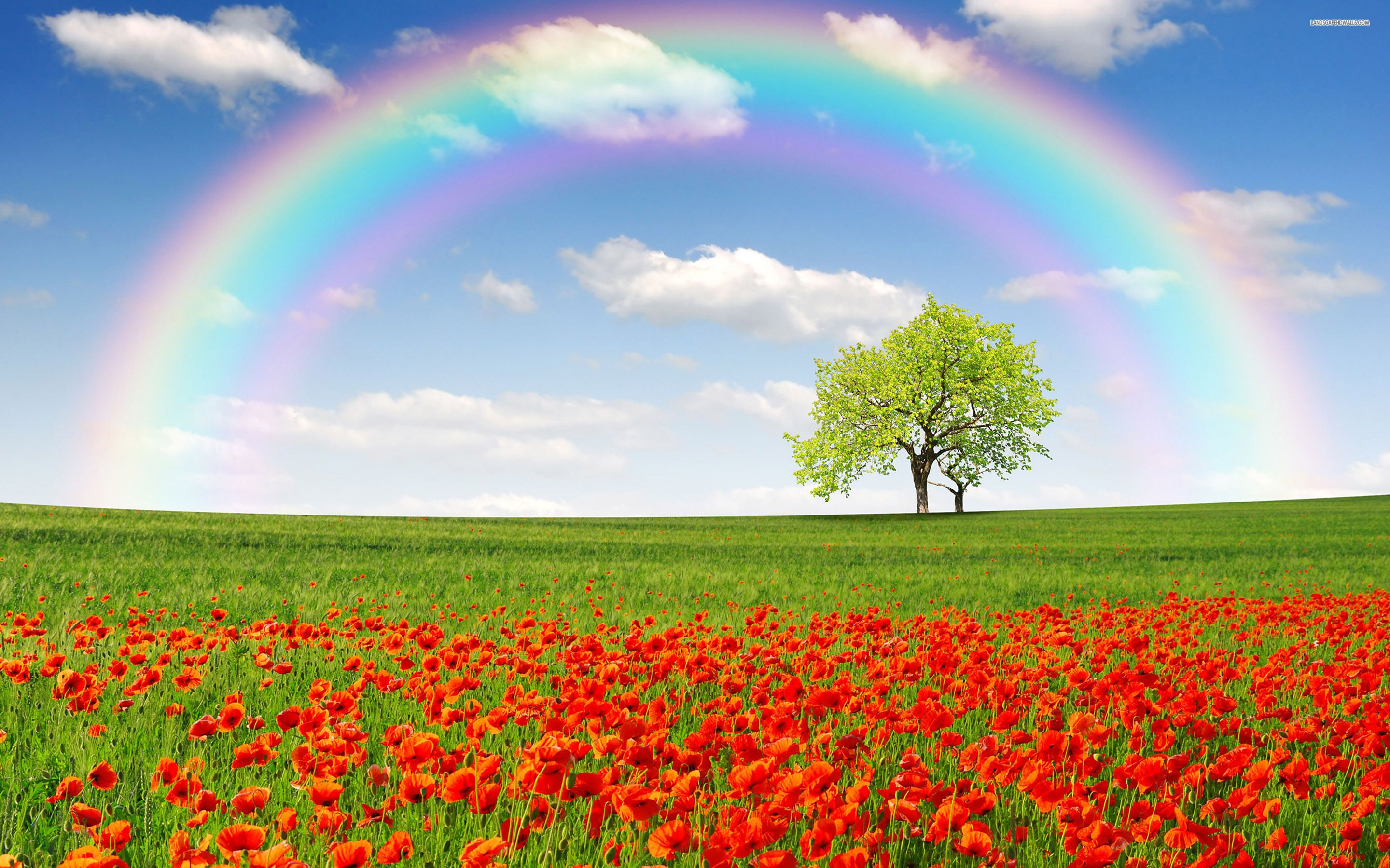 Rainbow on a poppy field wallpaper wallpapers pinterest rainbow wallpapers rainbow desktop wallpapers 4694 and wallpapers voltagebd Choice Image