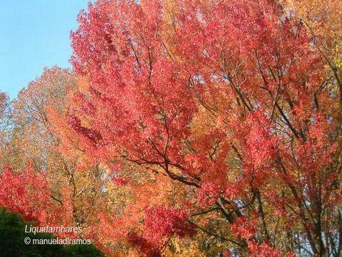 Dias com árvores: Novembro 2005