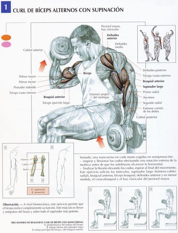 Curl de biceps alternos con supinación   Alternate biceps curl with ...