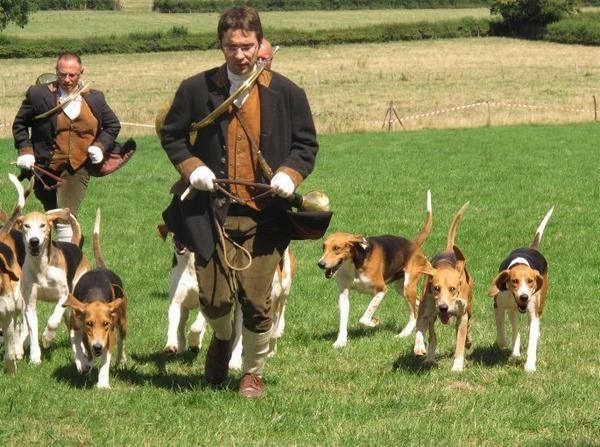 Anglo-Français de Petite Vénerie #Dogs #Hunting