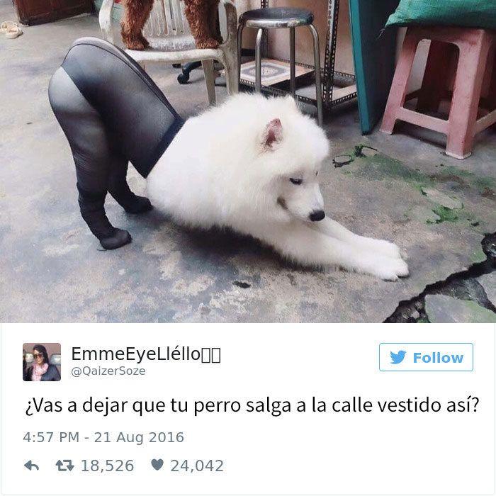 15 Tuits Sobre Perros Que Te Mataran De Risa Tweets Divertidos Memes Divertidos Sobre Perros Perros