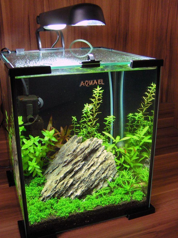aquascape 20l aquaria inspiration aquarium nano aquarium