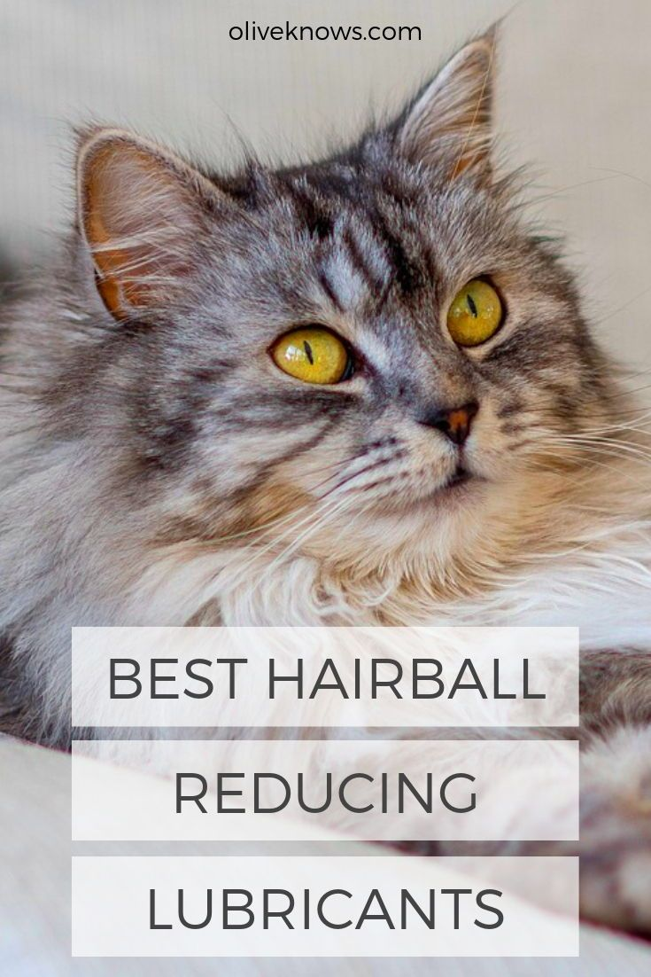 Best Hairball Reducing Lubricants Sick cat, Cat care, Cats