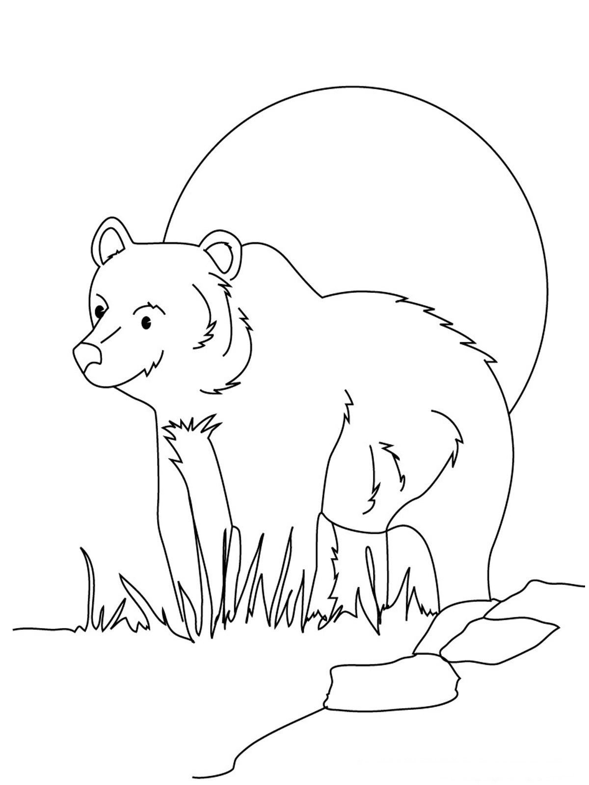 Bear Coloring Pages Realistic Animal Coloring Pages Bear Coloring Pages Teddy Bear Coloring Pages