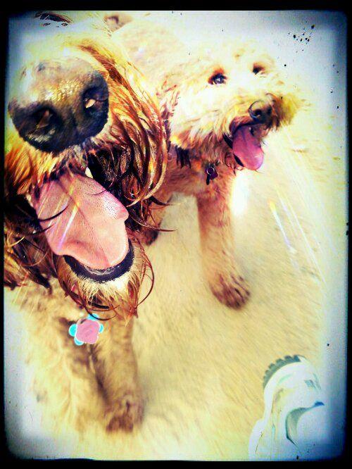 Sam and Luke love walking w me!