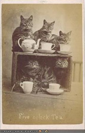 2 fave things - cats & Tea parties LOL