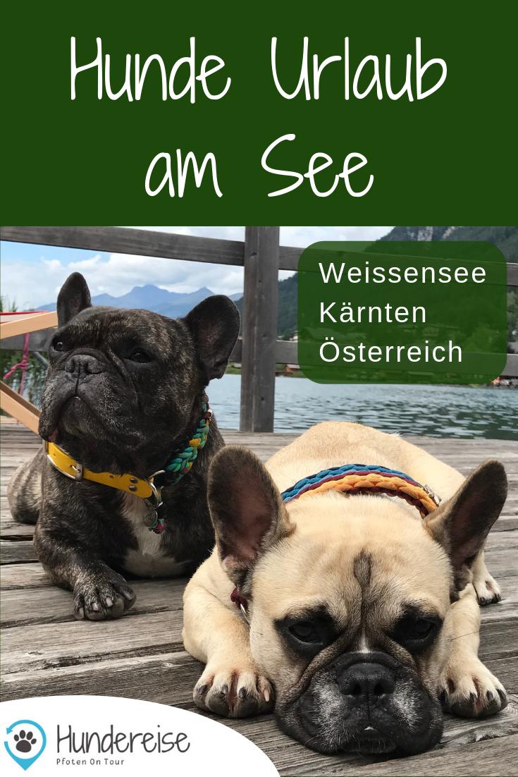 Urlaub Mit Hund Am Weissensee Karnten Urlaub Mit Hund Urlaub Am See Ferien Mit Hund