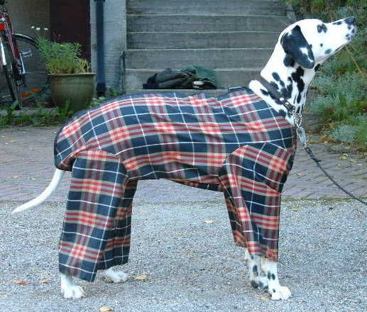 Pattern For 4 Legged Dog Costume Use Orange To Make Mabel Into
