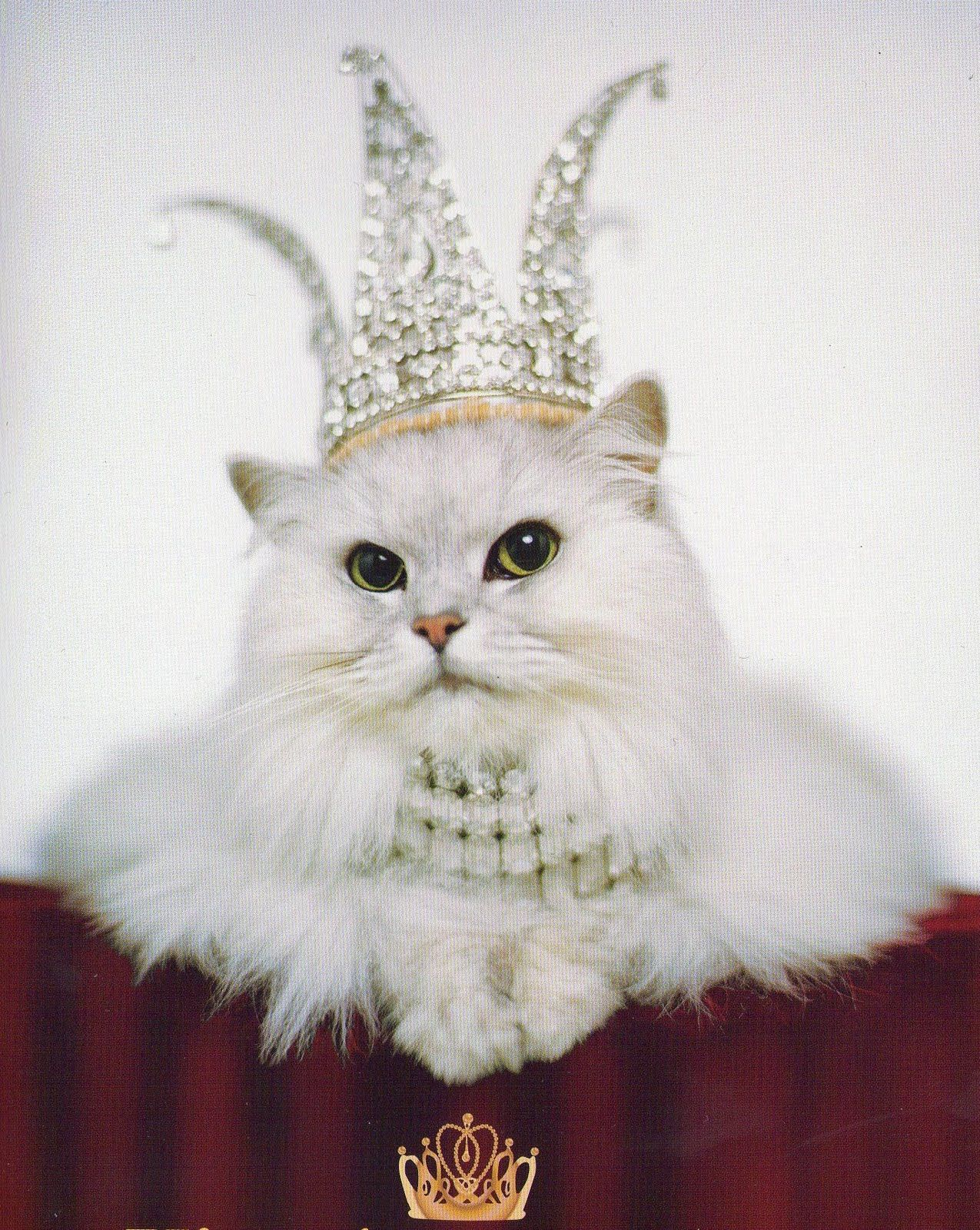 Crown Cat Amazing Queen Mew Photograph