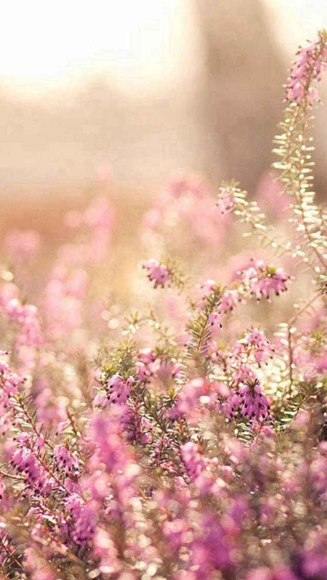 Nature Spring Bloomy Flowers Blurry iPhone 5s wallpaper